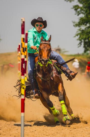 Horse Racing Winning Photo