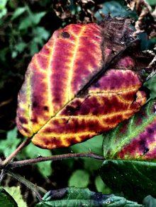 Autumnal symmetry