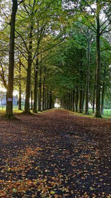 tapis de feuilles d'automne