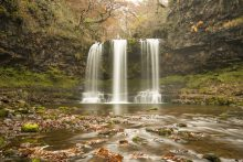Leaves fall at the waterfall